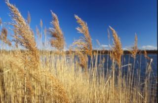 Landschaft, strohhalme, gras