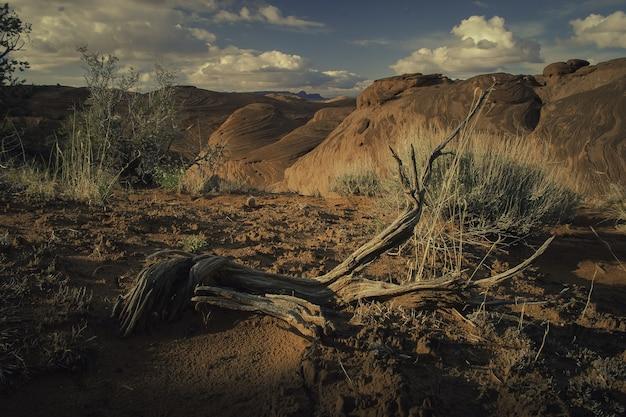 Landschaft verschiedener pflanzenarten, die inmitten von hügeln im canyon wachsen
