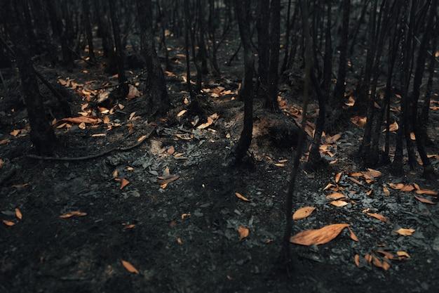 Landschaft von bäumen und büschen, die durch verheerendes feuer im tropischen regenwald verbrannt wurden. globale erwärmung. / ökologiekonzept