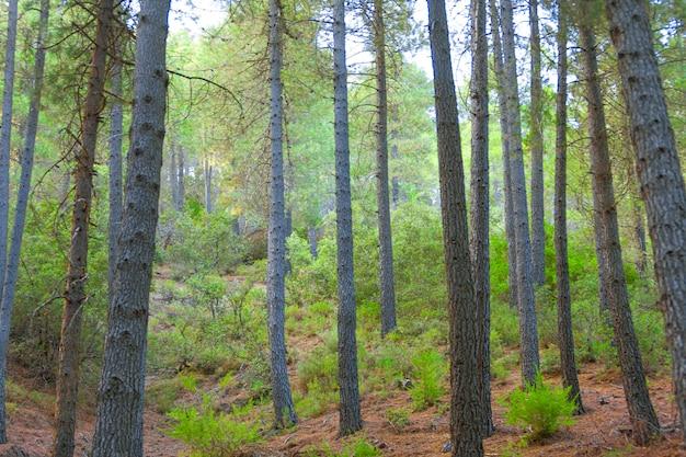 Landschaft von bäumen, wald und natur in taberrant el hociema marokko. maroc