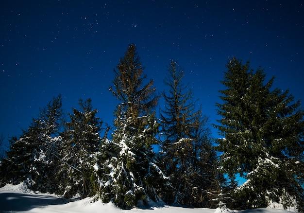 Landschaft von schneebedeckten hohen tannen, die zwischen schneeverwehungen auf den hügeln wachsen