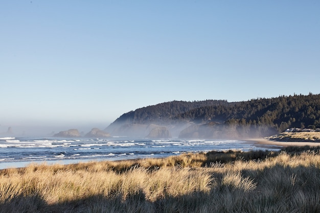 Landschaft von strandgras am morgen am cannon beach, oregon