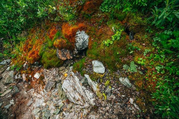 Landschaftlich mit fußweg zwischen dichtem moos und üppiger vegetation. bergpfad am moosigen hang mit frischem grün und vielen kleinen blumen. bunter hintergrund mit weg zwischen reicher alpenflora.