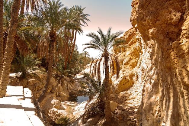 Landschafts-chebika-oase in der sahara-wüste. palmen über dem see