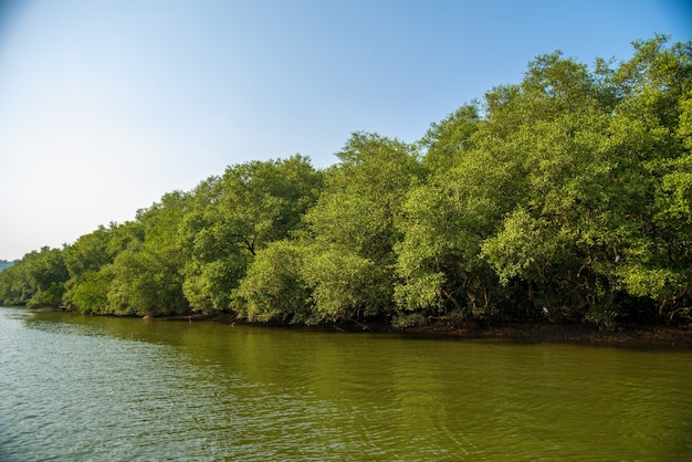 Landschaftsansicht von backwaters mit kokospalmen und mangrovenwald bei goa, indien.