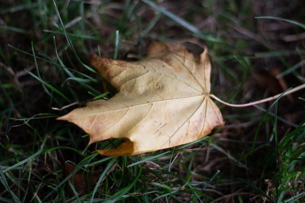 Landschaftsaufnahme eines braunen blattes in einem grünen grasgrund