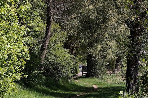 Landschaftsaufnahme eines lebendigen waldgebietes, das mit verschiedenen bäumen bedeckt ist