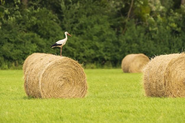 Landschaftsaufnahme eines storchs auf einer rolle heu in einem feld in frankreich
