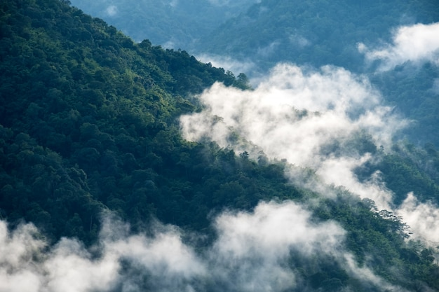 Landschaftsbild der grünen regenwaldhügel im nebligen tag