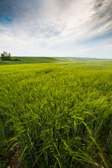 Landschaftsfeld, sonniger tag auf dem land