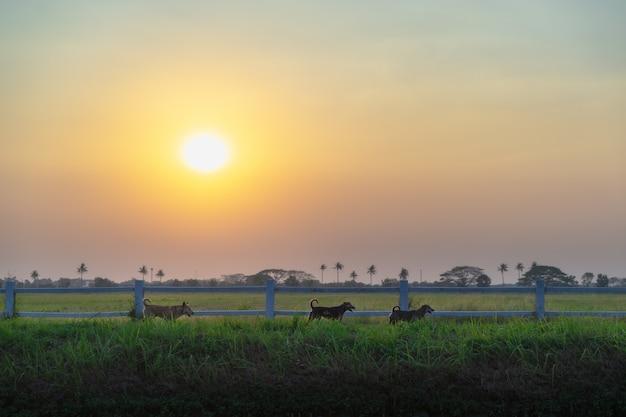 Landschaftsfotografie. abends spielen drei hunde auf rasen.