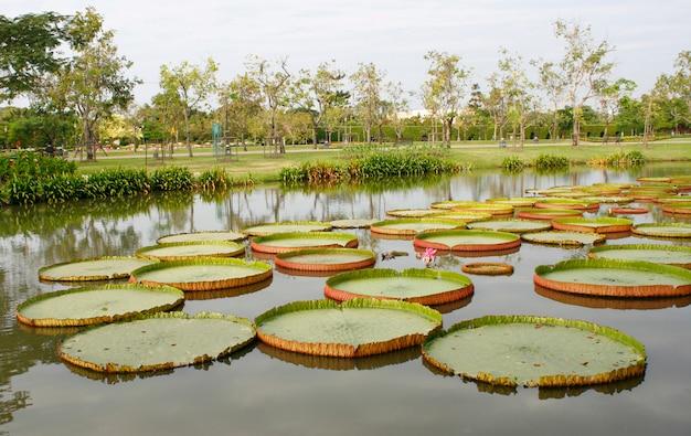Landschaftsgarten im freien mit teich