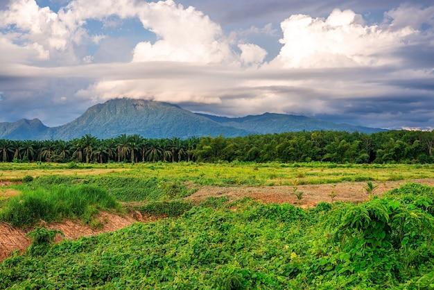 Landschaftsgebirgsblick mit blauem himmel und weißer wolke und grünem gras im abendlicht