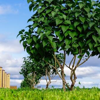 Landschaftsgestalterische dekoration der eingangsgruppe mit einer allee von büschen