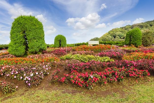Landschaftsgestaltung mit pflanzen und blumen im öffentlichen naturpark, chiang mai, thailand