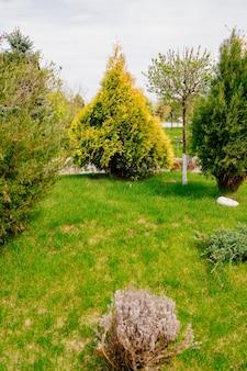 Landschaftsgestaltung rasen mit bäumen und sträuchern pflanzen