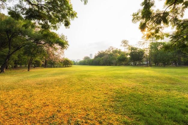 Landschaftsherbstgarten und -wiese am morgen mit baum, wunderbarer sonnenstrahl am naturpark
