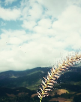 Landschaftsnatur-ansicht-wolken-sommer