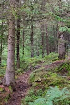 Landschaftspfad im wilden wald