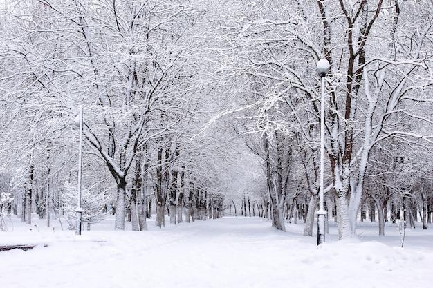 Landschaftsstädtischer central park am ersten verschneiten wintertag