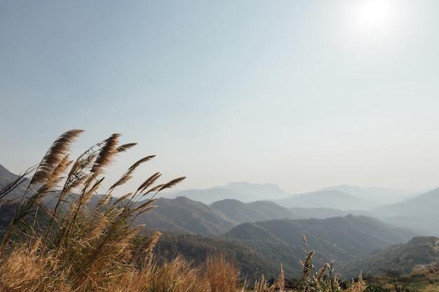 Landschaftswald in der atmosphäre kaltes wetter der winternebel bedeckte den berg.