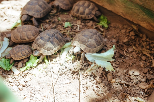 Landschildkröten kriechen im blumenbeet