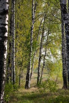 Landstraße der bahn, gasse im wald. laubbäume mit bunten grünen, gelben, orangefarbenen, goldenen blättern. sonnenstrahlen durch die äste.