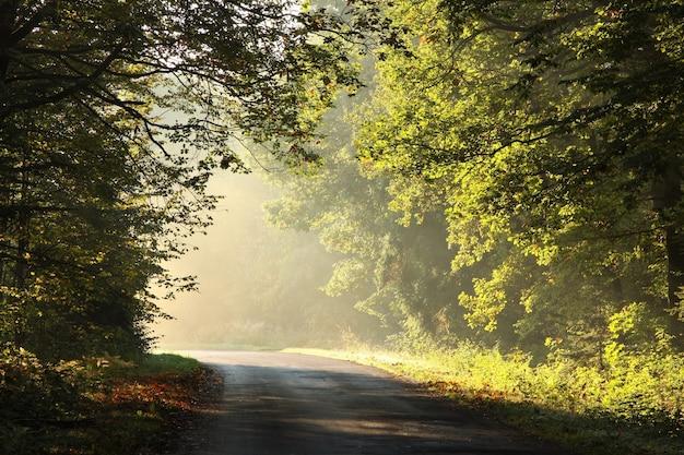 Landstraße durch einen herbstwald an einem nebligen sonnigen morgen