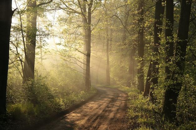 Landstraße durch nebligen wald während sonnenaufgang