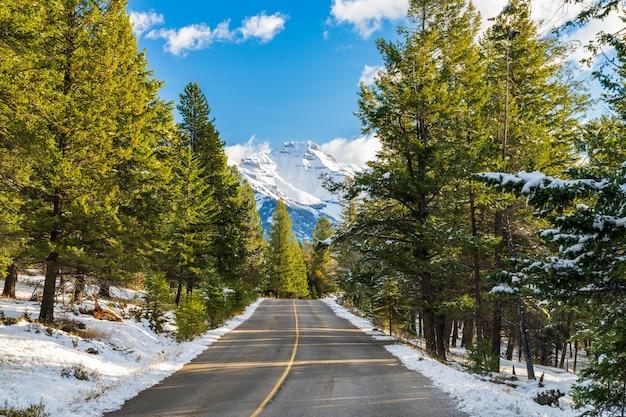 Landstraße im wald an einem sonnigen wintertagmorgen banff national park canadian rockies