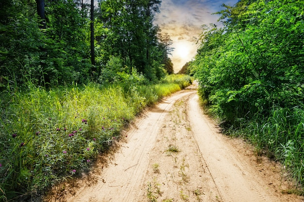 Landstraße im wald mit grünem gras und bäumen