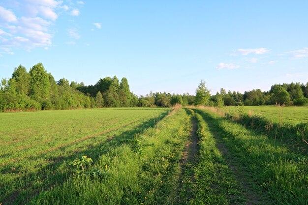 Landstraße in der nähe der grünen wiese