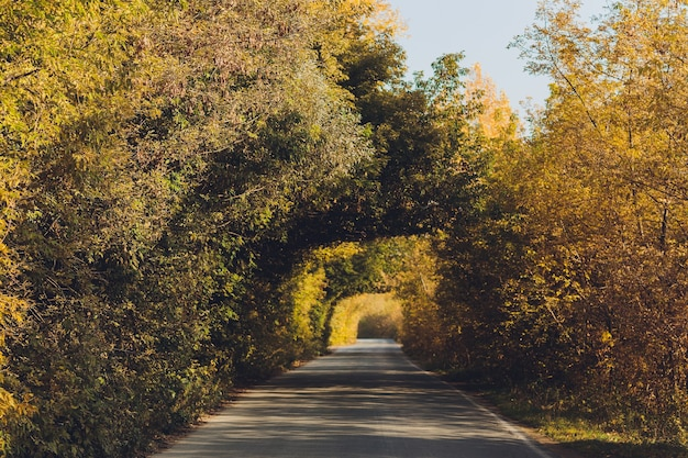 Landstraße in michigan im herbst.