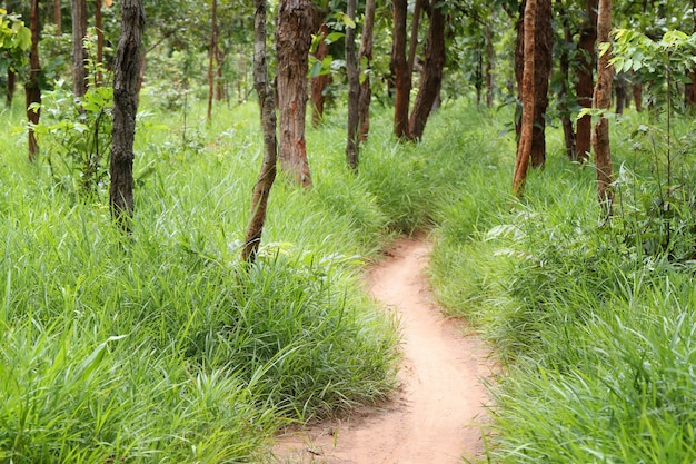 Landstraße mit bäumen des tropischen waldes.