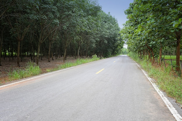 Landstraße mit bäumen.