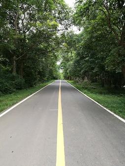 Landstraße mit grünem baum. straße der natur.