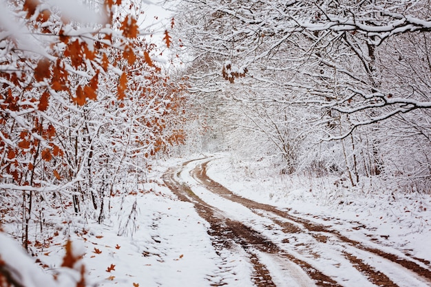 Landstraße mit schönen bäumen auf den seiten am wintertag