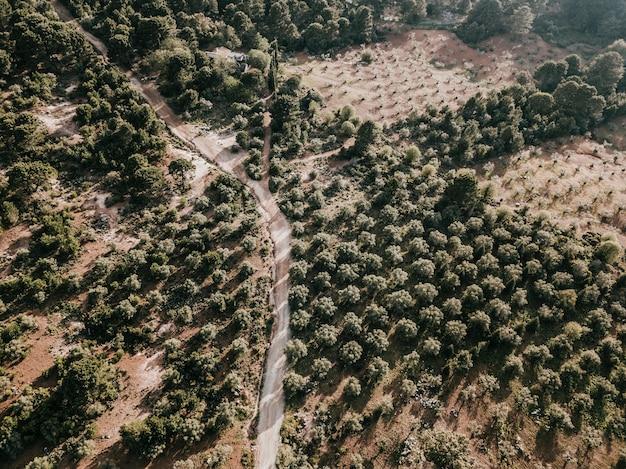 Landstraße und bäume in der ländlichen landschaft