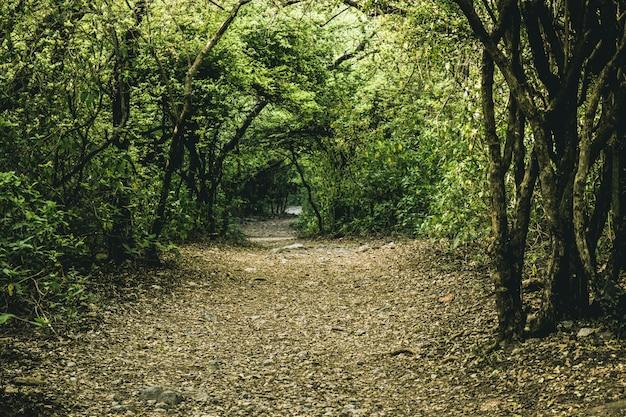 Landumfeld spur blatt wanderung wanderweg