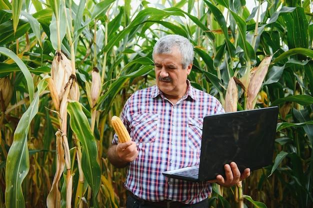 Landwirt auf dem feld, der maispflanzen an einem sonnigen sommertag überprüft, konzept für landwirtschaft und lebensmittelproduktion