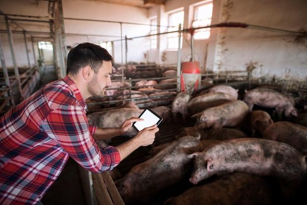 Landwirt auf der schweinefarm, der moderne anwendung auf seinem tablett verwendet, um den gesundheitszustand und die futterration der schweine zu überprüfen