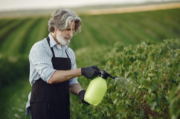 Landwirt besprüht gemüse im garten mit herbiziden. mann in einer schwarzen schürze.