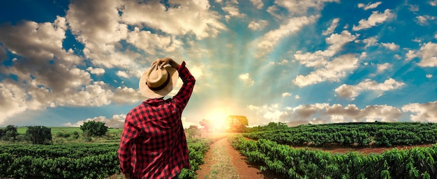 Landwirt, der an kaffeefeld bei sonnenuntergang im freien arbeitet