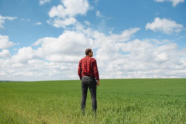 Landwirt, der an windigem frühlingstag durch ein grünes weizenfeld geht und getreidekulturen untersucht