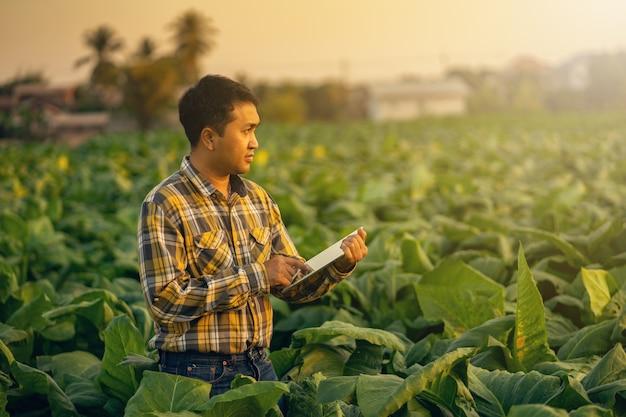 Landwirt, der anlage im tabakbauernhof erforscht. landwirtschaft und wissenschaftler konzept.