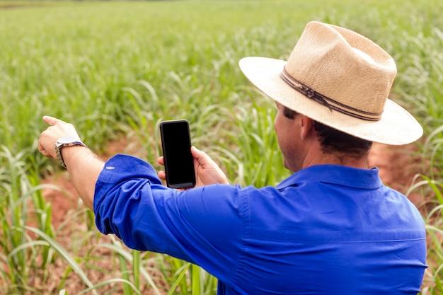 Landwirt, der auf dem gebiet des zuckerrohrs arbeitet und ein foto macht