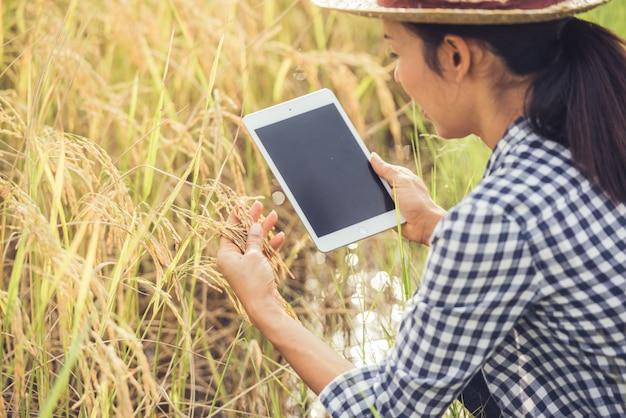 Landwirt, der auf einem reisgebiet mit einer tablette steht.
