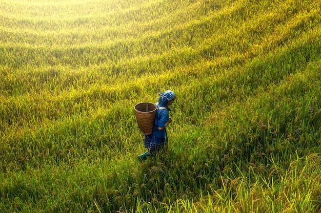 Landwirt, der auf reisfeld auf sonnenuntergang, landschaft von mu cang chai, yenbai, vietnam geht.