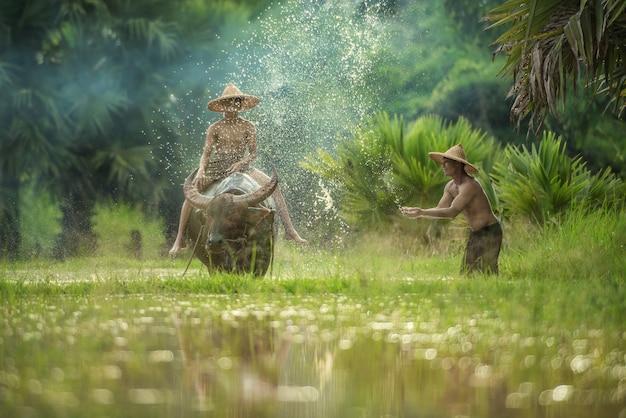 Landwirt, der den büffel pflügt reisfeld, den asiatischen mann verwendet den büffel, um für reispflanze in der regenzeit, sakonnakhon thailand zu pflügen verwendet
