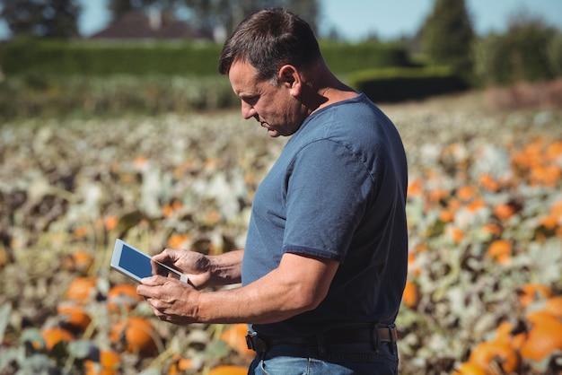 Landwirt, der digitale tablette auf dem kürbisgebiet verwendet